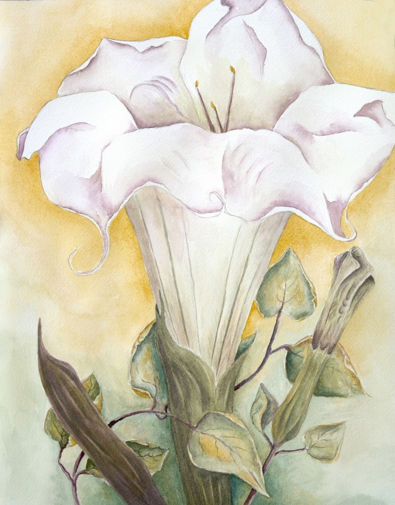 Watercolor of a fully open datura blossom, with details of buds and leaves.