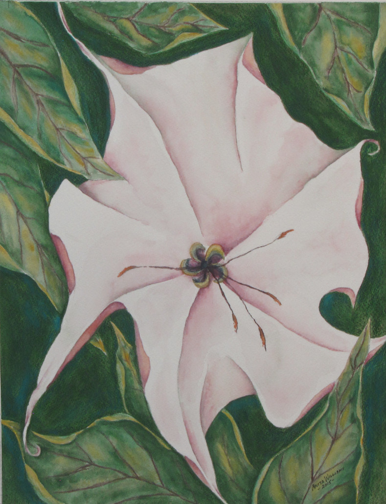 Somewhat abstract interpretation of an open datura bloom, surrounded by leaves.